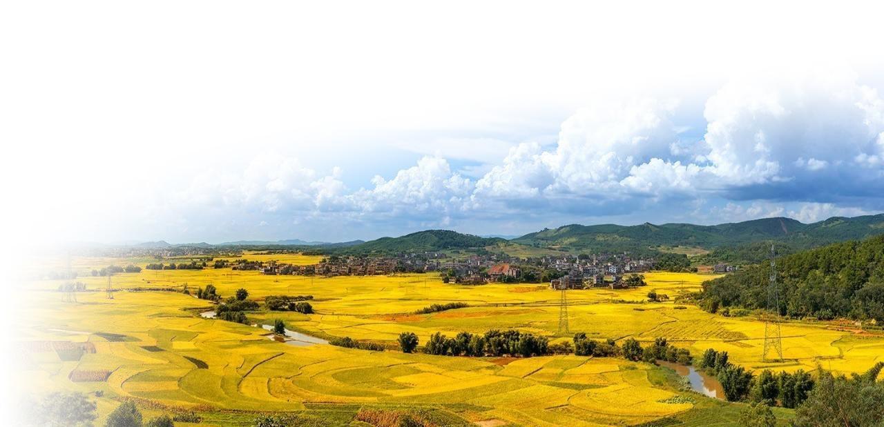 聚焦现代农业发展: 藏粮于地战略如何实施?