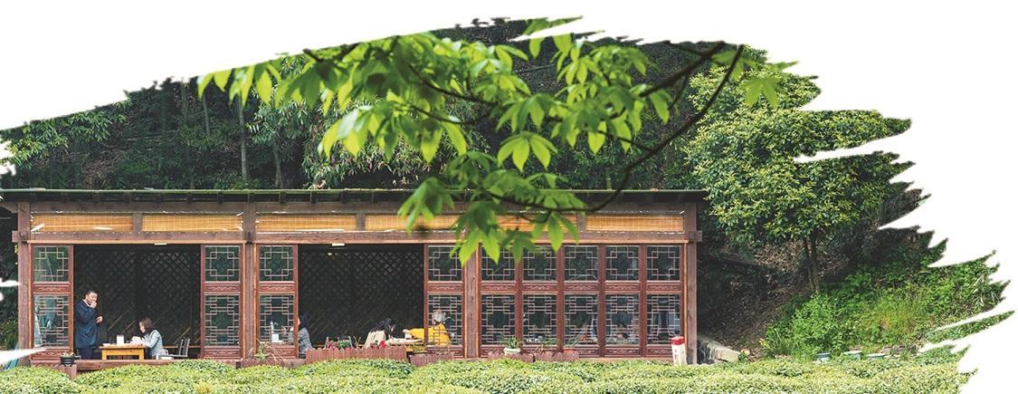 茶园变身景点 优化茶业结构